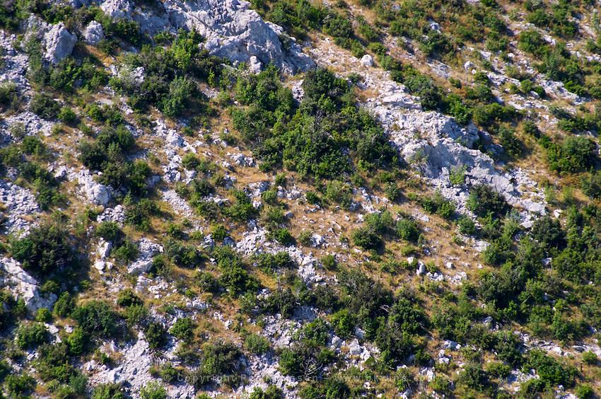 Typical vegetation on the mountain, small dry bushes on the white rock and yellow grass. Sveti Ilija mountain. Peljesac Peninsula. Peljesac peninsula. Dalmatian Coast, Croatia, Europe.