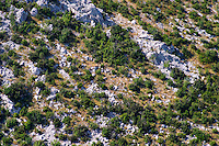 Typical vegetation on the mountain, small dry bushes on the white rock and yellow grass. Sveti Ilija mountain. Peljesac Peninsula. Peljesac peninsula. Dalmatian Coast, Croatia, Europe.