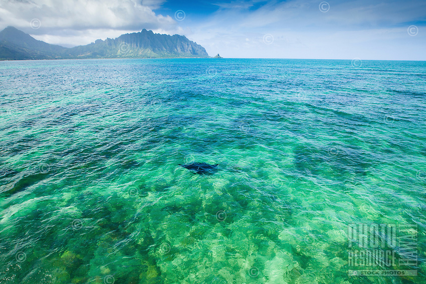 An aerial view of a manta ray drifting towards Chinaman's Hat on O'ahu, with Kualoa Valley in the distance.