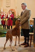 Europe/France/Centre/41/Loir-et-Cher/Sologne/Bauzy: Messe de la Saint-Hubert avec b&eacute;n&eacute;diction des chiens - Equipage de Chasse &agrave; Courre: Equipage dela For&ecirc;t des Loges<br /> Piqueux<br /> AUTO N&deg; 2012-448<br /> AUTO N&deg; 2012-449<br /> //Europe/France/Centre/41/Loir-et-Cher/Sologne/Bauzy: Mass of Saint Hubert before riding to hound, with blessing of the dogs<br /> AUTO N&deg; 2012-448<br /> AUTO N&deg; 2012-449