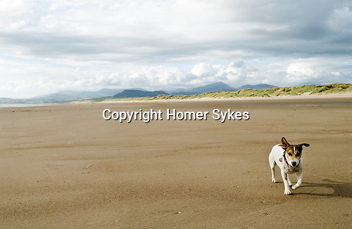 Brendan Harlech beach Wales. 2013