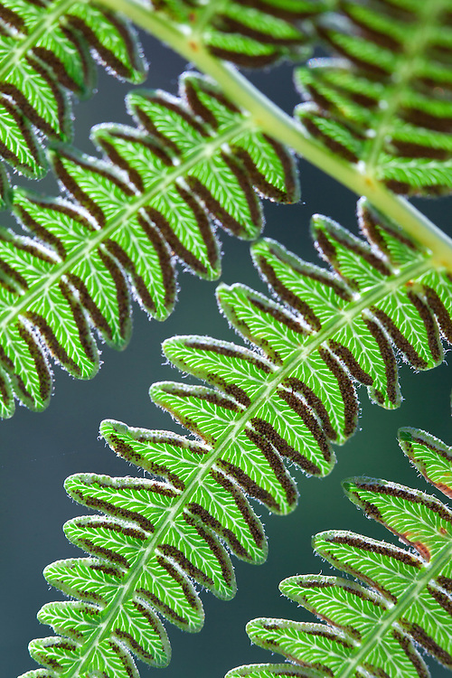 Close-up of fern in West Fork of Oak Creek Canyon, Arizona
