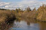 Urban wildlife habitat, Mercer Slough Nature Park, Bellevue, Washington, State, Pacific Northwest, USA,