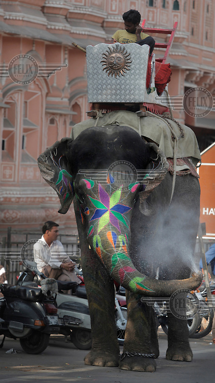 An elephant and his mahout on a street in central jaipur. The elephant was used for weddings.
