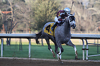 HOT SPRINGS, AR - February 11: Chanel's Legacy #4, ridden by jockey Alex Birzer, wins the Martha Washington Stakes at Oaklawn Park on February 11, 2017 in Hot Springs, AR. (Photo by Ciara Bowen/Eclipse Sportswire/Getty Images)