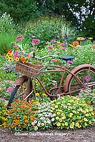63821-22202 Old bicycle with flower basket in garden with zinnias,  Marion Co., IL