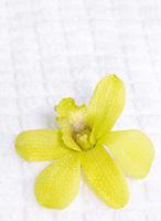 Green Orchid on Spa Towel&#xA;&#xA;<br />