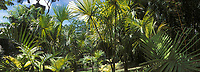 France/DOM/Martinique/Balata/Les jardins: Palmeraie