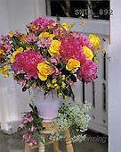 Carl, FLOWERS, nature, photos, SWLA, SWLA892,#F# Blumen, Natur, flores, naturaleza