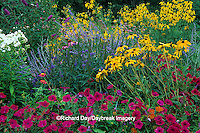 63821-08815 Wave Petunias, Black-eyed Susans & Garden Phlox in flower garden, Marion Co., IL