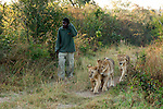 A walk with the lions