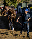 OCT 28: Breeders' Cup Juvenile  entrant Maxfield, with trainer by Brendan P. Walsh, at Santa Anita Park in Arcadia, California on Oct 28, 2019. Evers/Eclipse Sportswire/Breeders' Cup
