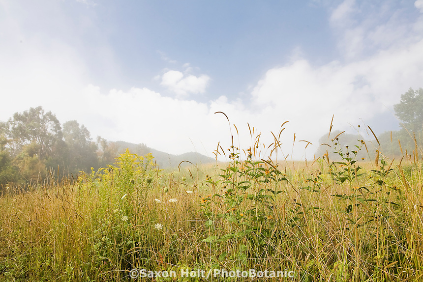 Fog clearing in native meadow with wildflowers and grass Virginia mountains,  Blue Ridge Parkway in August