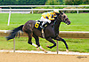 Lake Creek winning at Delaware Park on 6/15/16