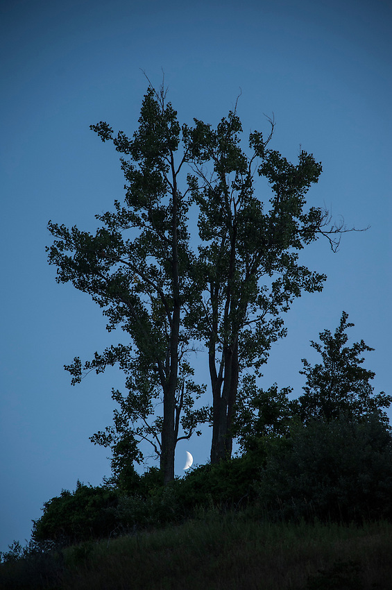 The moon between two trees at Sleeping Bear Dunes National Lakeshore near Traverse City, Michigan.