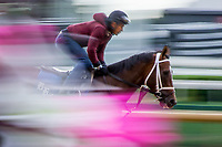 LOUISVILLE, KENTUCKY - MAY 03: at Churchill Downs on May 3, 2017 in Louisville, Kentucky. (Photo by Jesse Caris/Eclipse Sportswire/Getty Images)