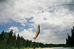 A Rainbow Trout dangles on the end of a line after being caught outside of Teton National Park in Wyoming.