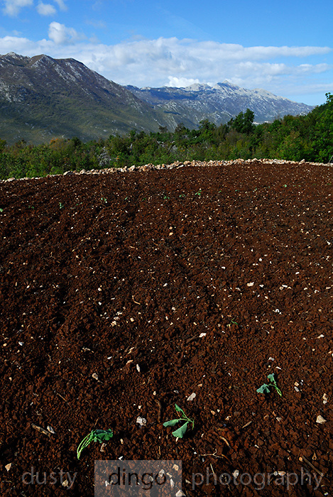 Recently ploughed rich brown earth, Rascane, Croatia