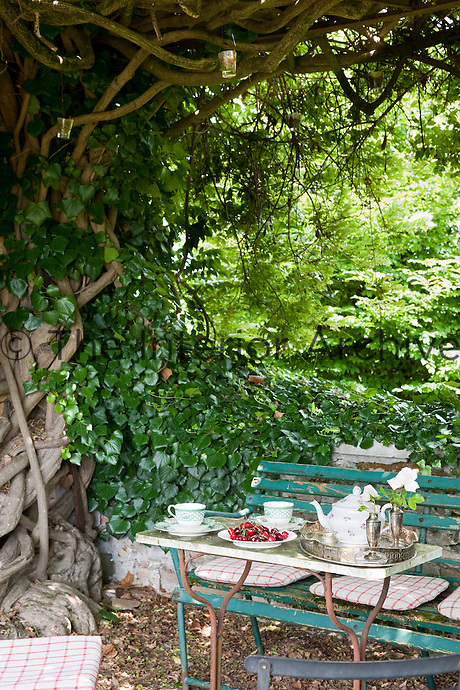 Afternoon tea served in the shade of a large tree on a rustic table with a battered wooden bench