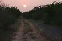 Ranch Road at sunset, Rio Grande Valley,Texas, USA