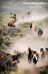 A photo of cowboys gathering horses of off the range. Cowboy Photos, riding,roping,horseback