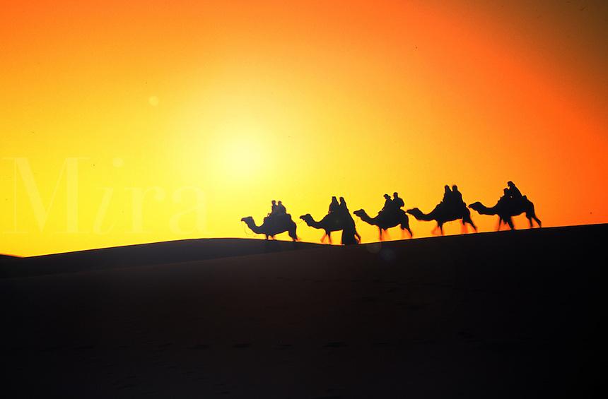 Camel Carivan, Morocco