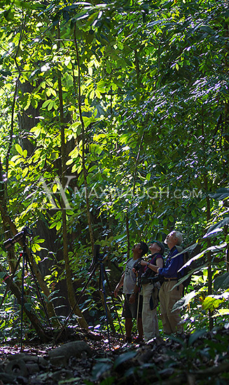 Visitors look for wildlife in the jungles of Corcovado.