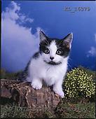 Interlitho, ANIMALS, cats, photos+++++,cat,heaven,KL16379,#a# Katzen, gatos