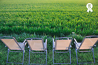 Garden chairs Empty facing green wheat field at sunset (Licence this image exclusively with Getty: http://www.gettyimages.com/detail/81867359 )