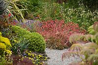 Cottage garden with flowering red succulent (center); green mounds of Hebe (left center). Sally Robertson Garden.
