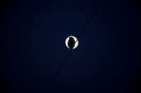 Pirapora_MG, Brasil...Silhueta de uma coruja em Pirapora, Minas Gerais...An owl silhouette in Pirapora, Minas Gerais...Foto: LEO DRUMOND /  NITRO