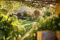 View of sunlit garden and lawn from stone pavilion (ramada) with Hydrangea in foreground in Califoria garden
