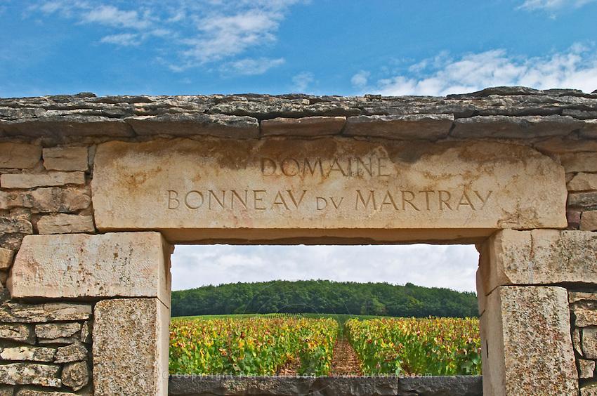 Vineyard. Domaine Bonneau du Martray, Corton Charlemagne. Aloxe Corton, Cote de Beaune, d'Or, Burgundy, France