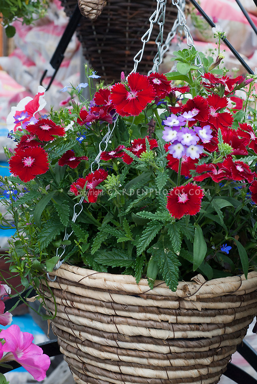 Hanging wicker basket container red Dianthus garden pinks in red, Verbena in lavender and white
