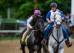 LOUISVILLE, KENTUCKY - MAY 01: Gray Magician prepares for the Kentucky Derby at Churchill Downs in Louisville, Kentucky on May 01, 2019. Evers/Eclipse Sportswire/CSM