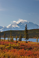 Autumn tundra along the shore of Wonder Lake, mt Denali of the Alaska Range mountains, Denali National Park, Interior, Alaska.