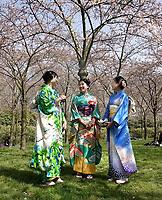 Nederland Amstelveen - 2018. Cherry Blossom Festival in het Amsterdamse Bos . Het Japanse Hanami Matsuri (Kersenbloesem festival) markeert de start van de lente. Volgens traditie vieren families en vrienden dit met een picknick onder de kersenbomen die in bloei staan. De gemeente Amstelveen organiseert dit festival voor de Japanse gemeenschap, als dank voor de schenking van 400 kersenbomen in 2000. Foto Berlinda van Dam / Hollandse Hoogte