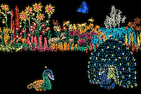 Holiday Lights color Bellevue Botanical Gardens' seasonal Garden D'Lights display. Bellevue, Washington State.