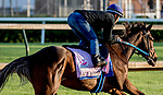 LOUISVILLE, KENTUCKY - APRIL 27: Lady Apple, trained by Steve Asmussen, exercises in preparation for the Kentucky Oaks at Churchill Downs in Louisville, Kentucky on April 27, 2019. Scott Serio/Eclipse Sportswire/CSM