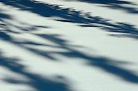 tree shadows<br /> Longlac<br /> Ontario<br /> Canada
