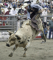 29 Aug 2004: Bull Rider Clayton Foltyn 10th ranked in the world rides the bull Broken Bones during the PRCA 2004 Extreme Bulls competition in Bremerton, WA.