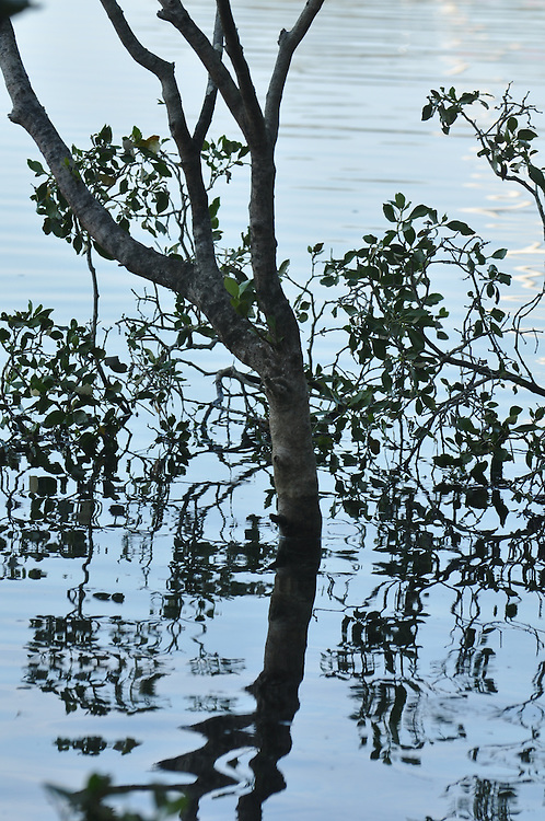 Mangrove, New South Wales, Australia