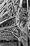 """Ta Prohm Roots And Stone 08 - Strangler fig and silk-cotton tree roots around the """"Tomb Raider"""" doorway, Ta Prohm Temple, Angkor, Cambodia"""