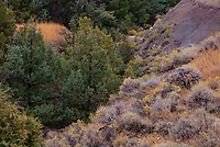 Various forest trees and shrubs fill in a gulie in the badlands of Theodore Roosevelt National Park in North Dakota