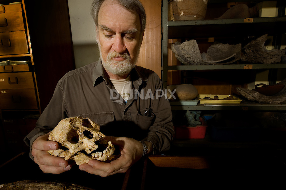 Dr. Mike Morwood examines the skull of LB1, the type specimen for Homo floresiensis, aka, the Flores hobbit, in Jakarta.