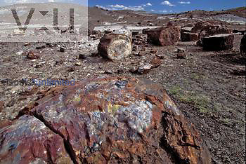 Petrified tree trunks in Petrified Forest National Park, Arizona, USA.