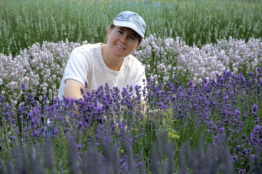 Woman cutting lavender, Sequim, Washington
