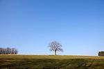 Europa, DEU, Deutschland, Nordrhein Westfalen, NRW, Bergisches Land, Oberbergisches Land, Wipperfuerth, Eiche, Eichenbaum, Blauer Himmel, Wolkenlos, Kategorien und Themen, Natur, Umwelt, Landschaft, Jahreszeiten, Stimmungen, Landschaftsfotografie, Landschaften, Landschaftsphoto, Landschaftsphotographie, <br /> <br /> [Fuer die Nutzung gelten die jeweils gueltigen Allgemeinen Liefer-und Geschaeftsbedingungen. Nutzung nur gegen Verwendungsmeldung und Nachweis. Download der AGB unter http://www.image-box.com oder werden auf Anfrage zugesendet. Freigabe ist vorher erforderlich. Jede Nutzung des Fotos ist honorarpflichtig gemaess derzeit gueltiger MFM Liste - Kontakt, Uwe Schmid-Fotografie, Duisburg, Tel. (+49).2065.677997, archiv@image-box.com, www.image-box.com]