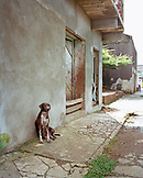 PANAMA, Portobello, a dog sits outside by the wall of a house in the shade