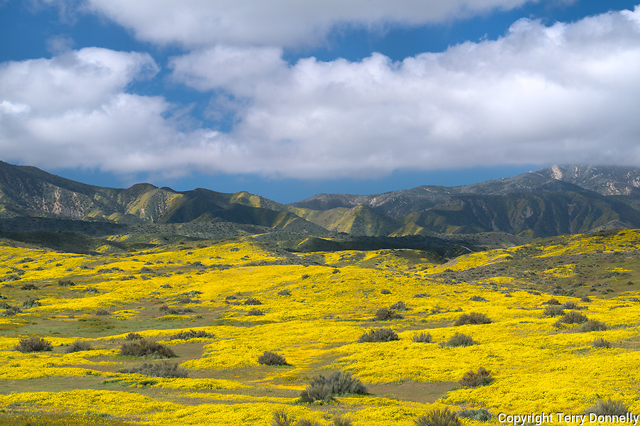 Carrizo Plain National Monument, California:<br /> Valley of yellow and green spring colors beneath the Caliente range